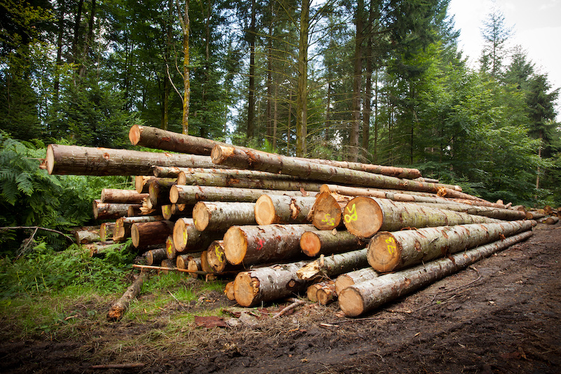 Lumber lying on ground in forest.