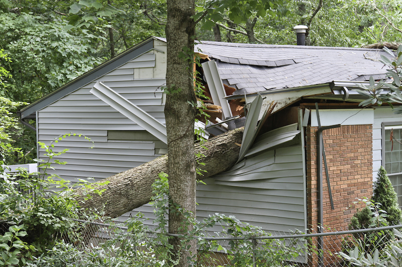 A large oak tree falls on a small house during a summer storm, caving in the roof and room under it.
