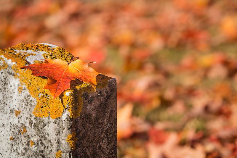 Fallen maple leaf on tombstone in autumn cemetery, copy space