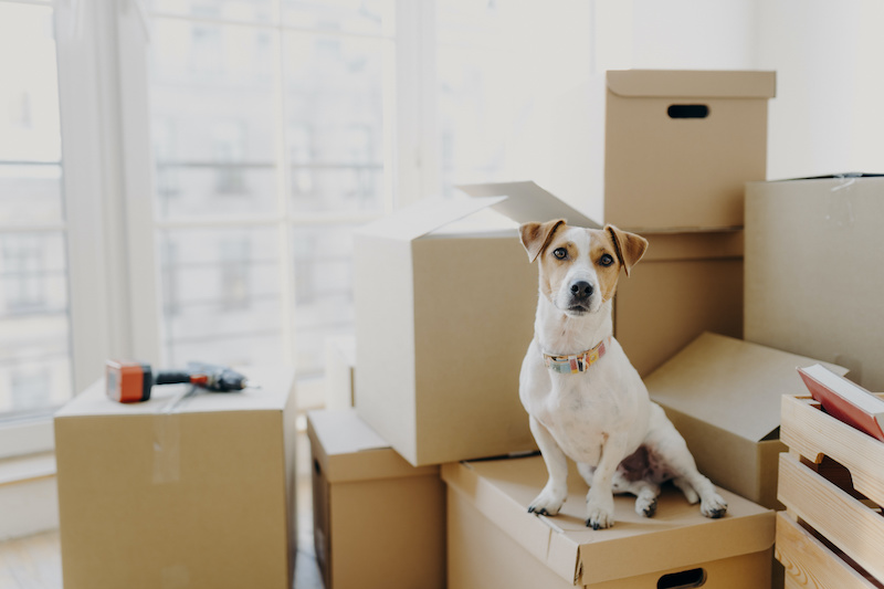 Cute dog sitting on a box in a new apartment